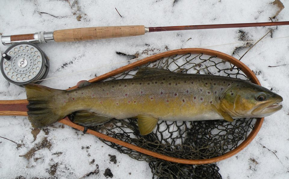 Thanksgiving Trout 2