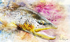 Fly Art by Daniel - Splash Series - Brown Trout