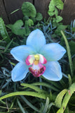 Blue Orchid Clip #F1020