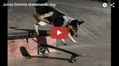 Jumpy Extreme Skateboarder dog