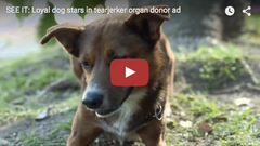 Organ Donation, Dog Waiting