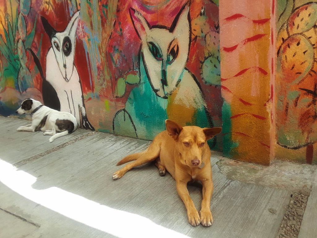 Lisa Sonora's dogs - Katy & Rocky in front of their portraits