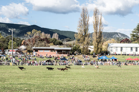 Great Nundle Dog Race