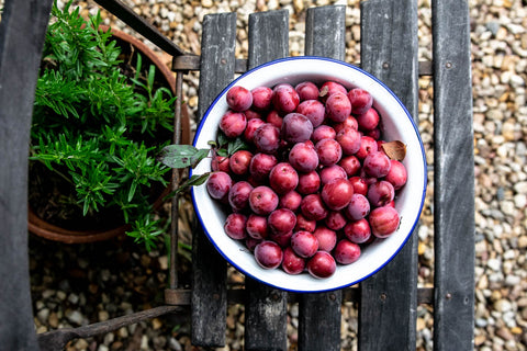Summer plum harvest - Odgers and McClelland Exchange Stores
