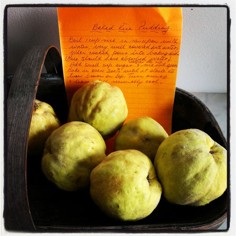 Heirloom recipes quinces