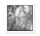 Minimalist Fine Art Prints | Nature Botanical Photography | Black and White Monochrome