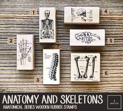 Anatomy and Skeletons Wooden Rubber Stamps