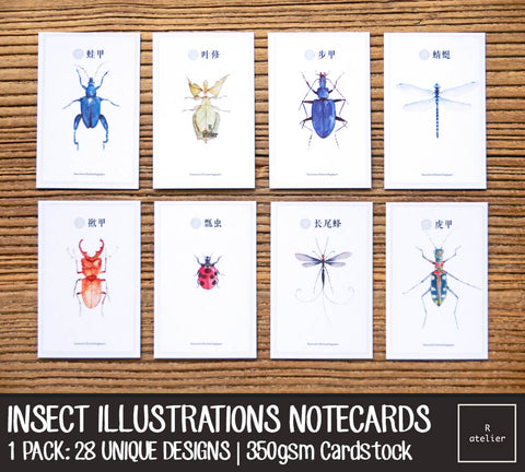Insect Illustrations Notecards