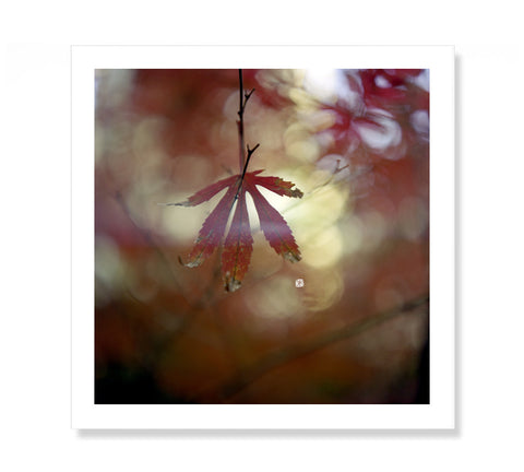 Fine Art Photography Print | Maple Leaves | Nature Botanical Photography