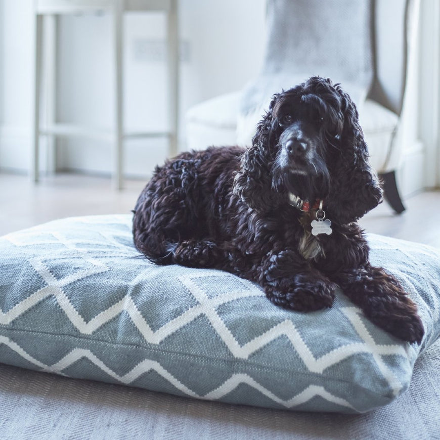 Juno floor cushion used as a dog bed
