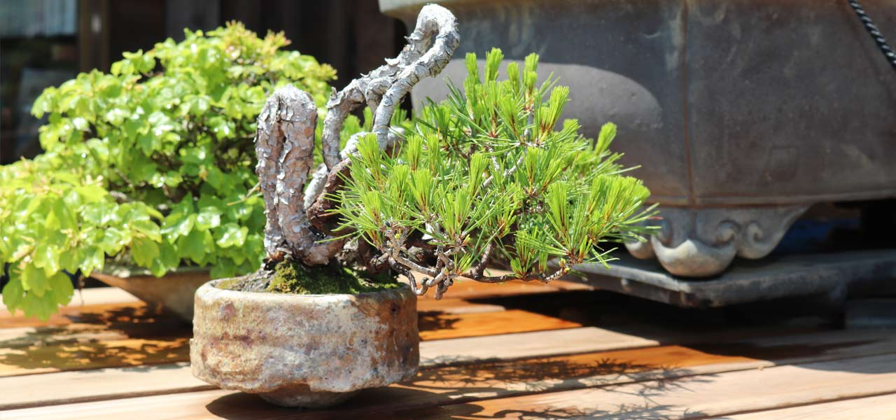 8 Bonsai Goals for 2020