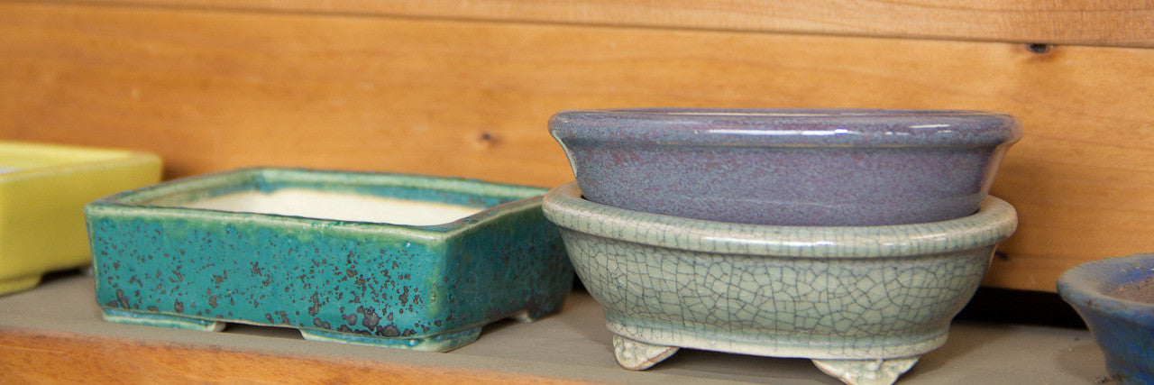 choosing a bonsai pot container