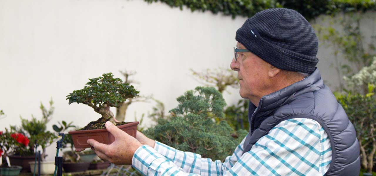 hennie nel bonsai shohin