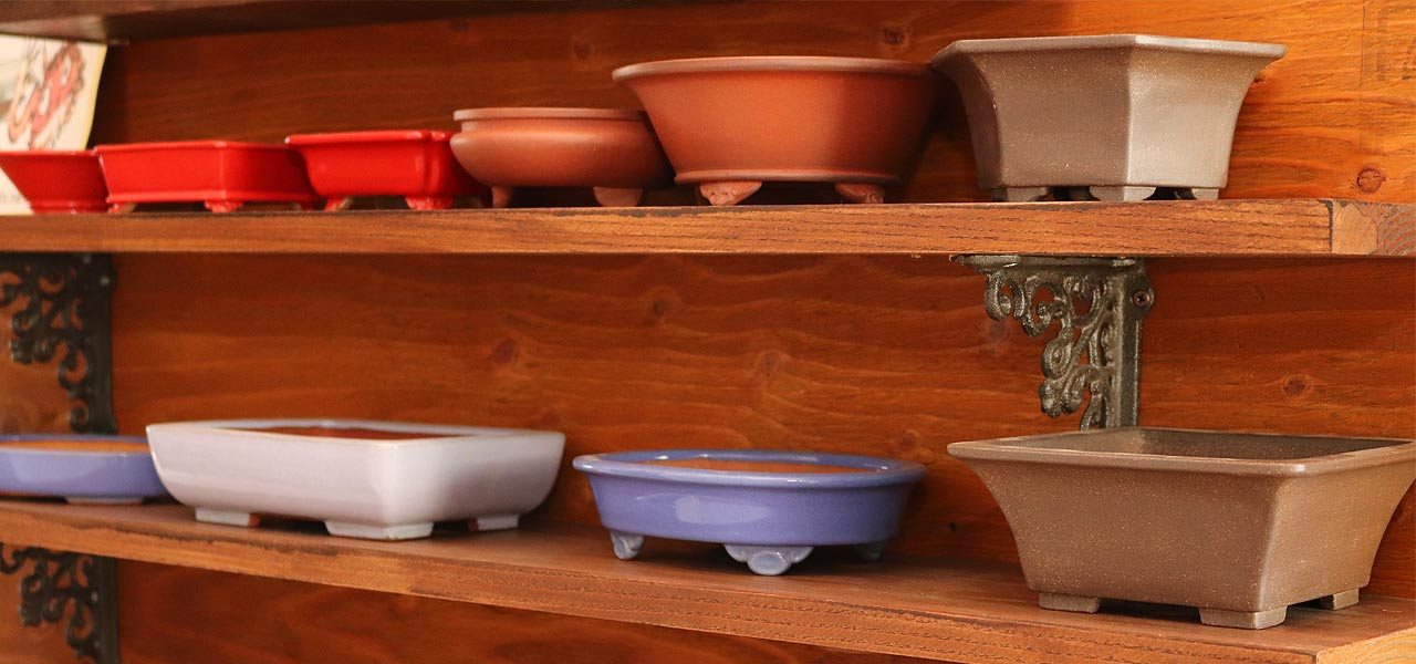 how to choose a bonsai pot