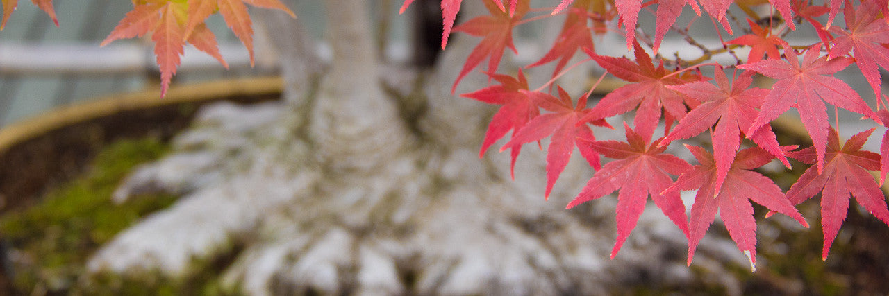 Bonsai activities in autumn