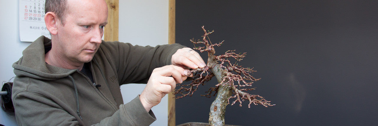 Terry Erasmus works on a chinese elm