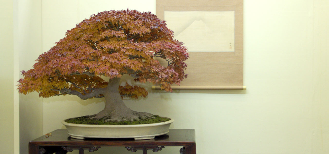 autumn bonsai tips bonsai trees