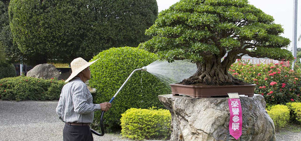 Water Saving Tips for Bonsai Artists