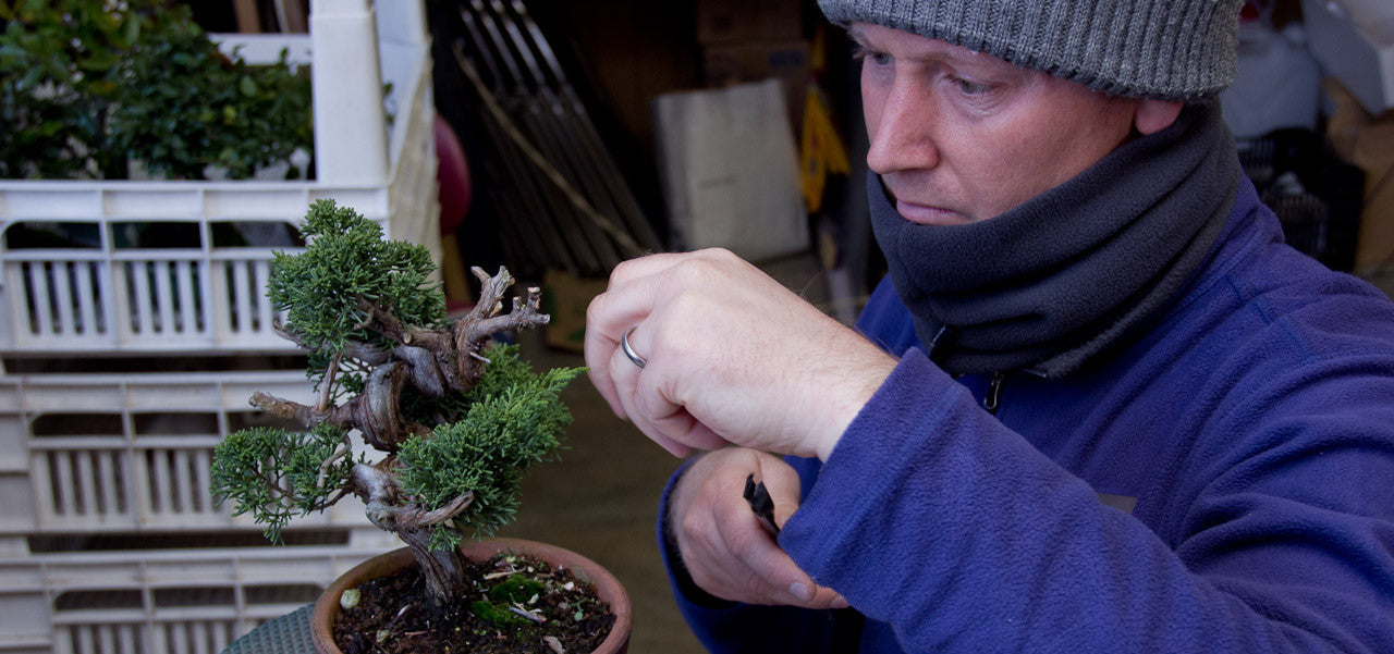 winter bonsai tree tasks