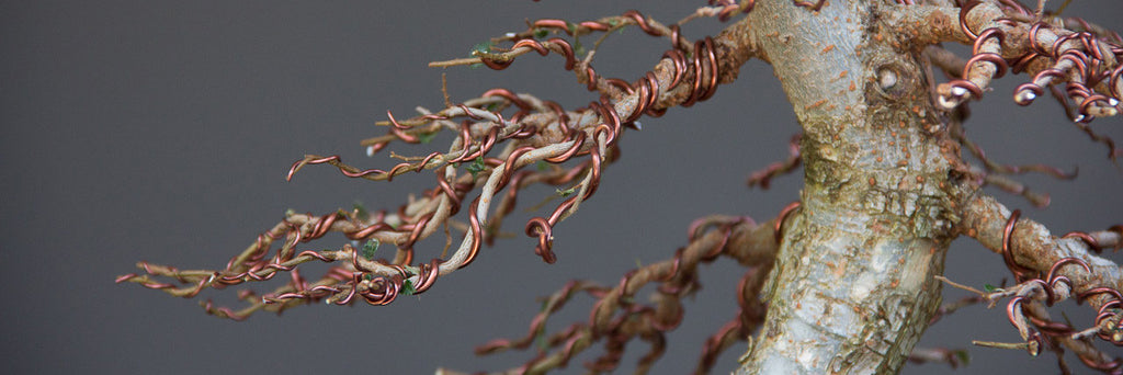 5 Wiring Tips for your bonsai trees