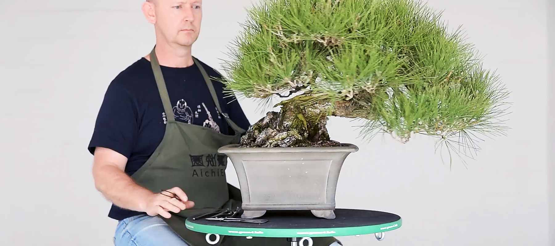 Japanese turntables collection bonsai