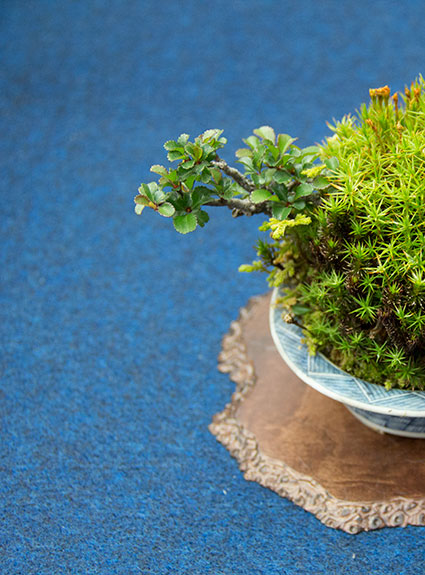 bonsai tree weekly product specials