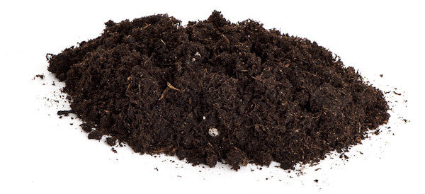 Peat moss for bonsai trees