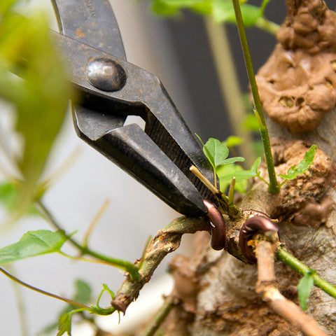 Bonsai pliers for general use