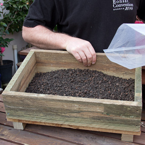 Planting box for the Hackberry layering