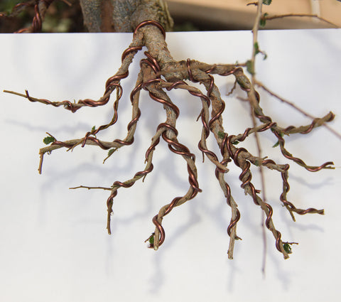 Branch structure of bonsai trees