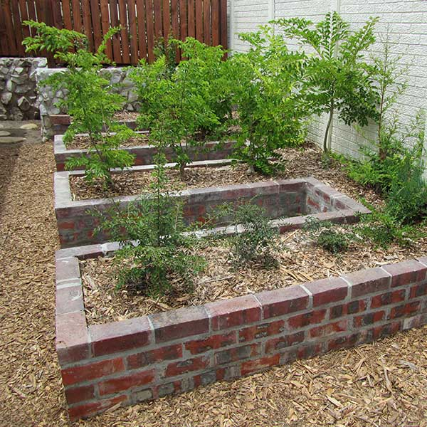 Raised growing beds for bonsai