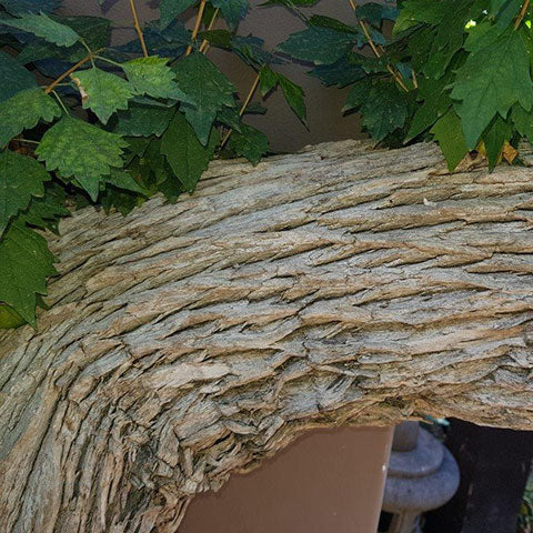 premna bonsai bark