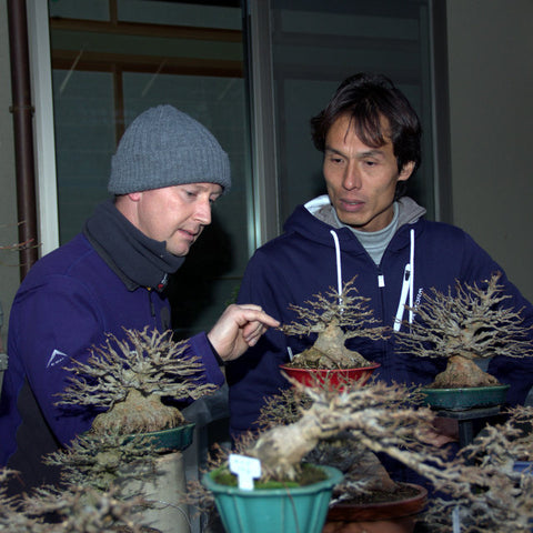 Specialist bonsai nurseries