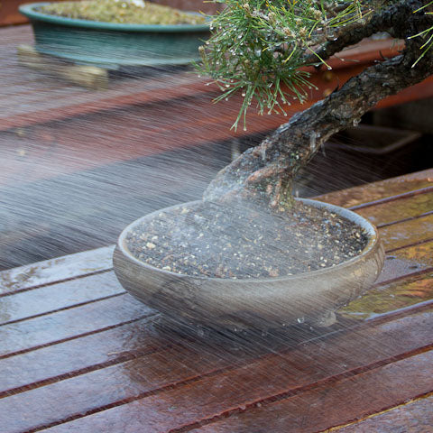 fine watering wand for bonsai trees