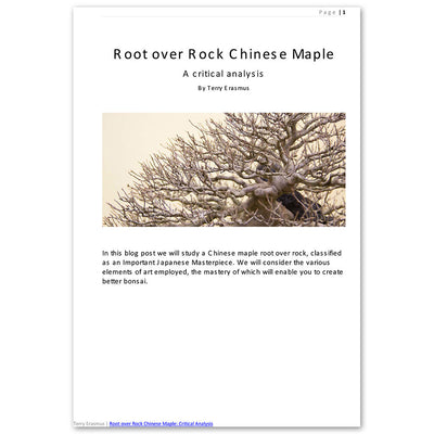 Root over Rock Chinese Maple: A Critical Analysis -   - E-Book