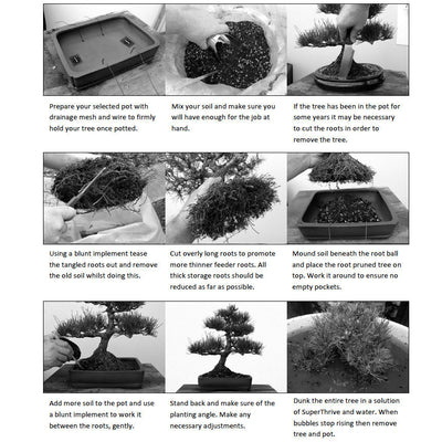 Bonsai Beginners E-Book -   - Books