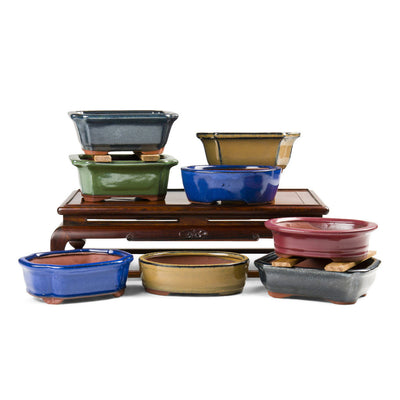 "Assorted Glazed Bonsai Pots, 6"" -   - Pots"
