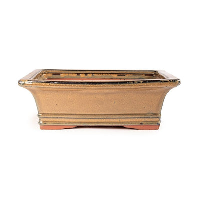 "Assorted Glazed Bonsai Pots, 10"" -  Mustard Rectangle, 25 x 20 x 9cm - Pots"
