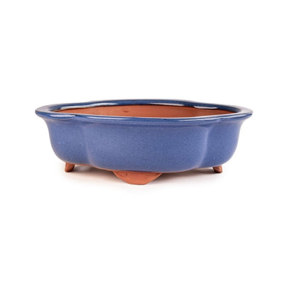 "Assorted Glazed Bonsai Pots, 10"" -  Blue Floriated, 26 x 21 x 7cm - Pots"