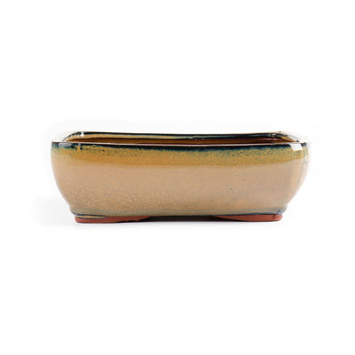"Assorted Glazed Bonsai Pots, 10"" -  Mustard Rounded Rectangle, 24 x 18.5 x 8cm - Pots"