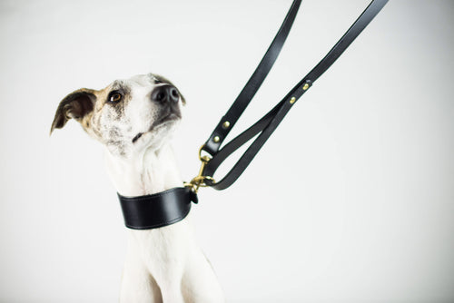 Tips on How To Keep Your Dog Leather Accessories In Top Condition