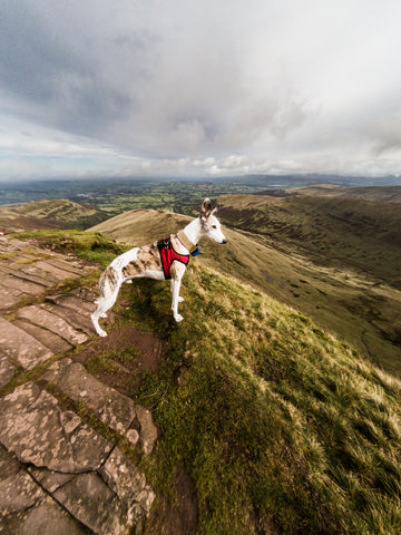 Kai at Pen Y Fan Brecon Beacons