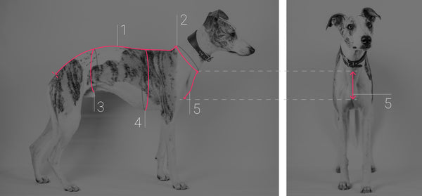 Dogsnug how to measure your dog