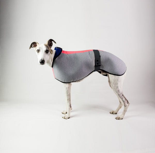 Waterproof Dog Coat for Whippets, Lurchers, Italian Greyhounds, Sighthounds