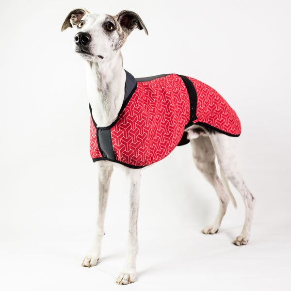 Limited Edition Dog Coat with Lining
