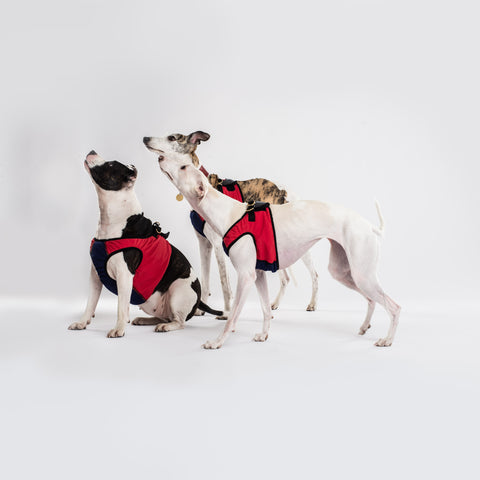 Dog Cooling Harness