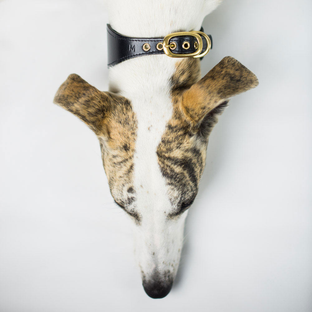 Leather Dog Collar for Sighthounds