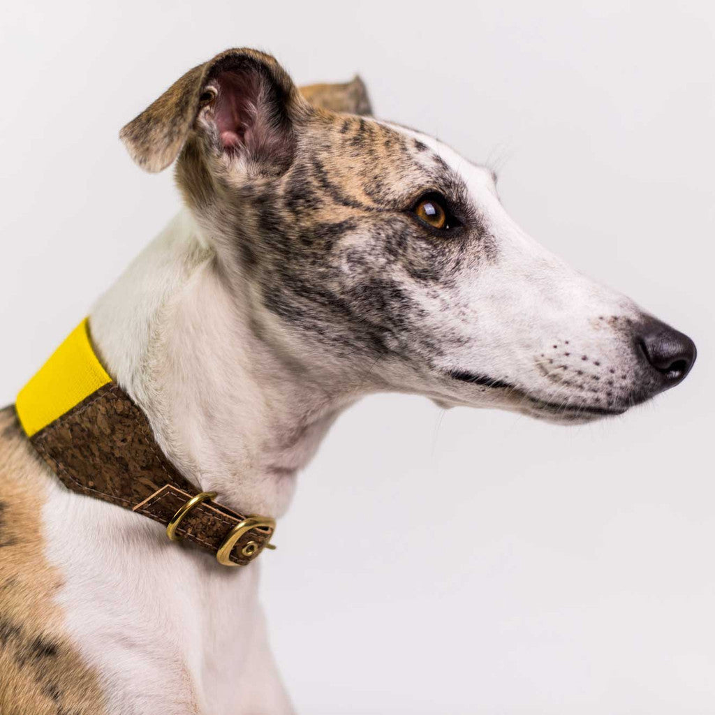 Ray of Sunshine Dog Collar for Sighthounds