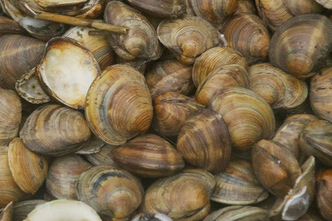 Chowder Clams  $1.29lb