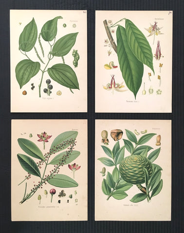 Prints, botanicals, flowers, flower prints9, floral prints, antique prints, home decor, home decorating, interior decor, wall decor, wall art, botanical prints, green, print set, for sale, art, calming,